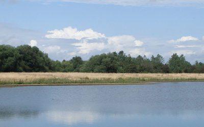 Woodland Management Support
