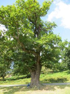 Making Sense of Bats in Trees