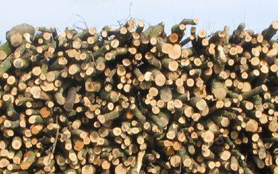 Effective Woodland Management