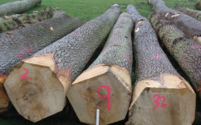 Timber prices have remained strong coming into the summer months