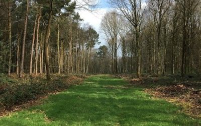 What's in a Wood? Biomass serving sound woodland management