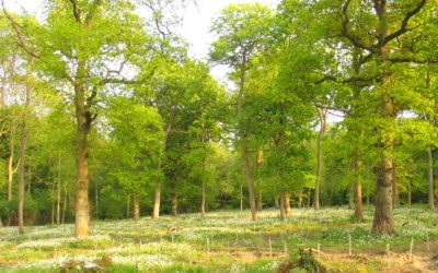 Are your woodlands an untapped resource?