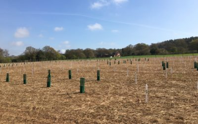 Would you like grant money for planting woodland in 2018? Start thinking about your Woodland Creation application.