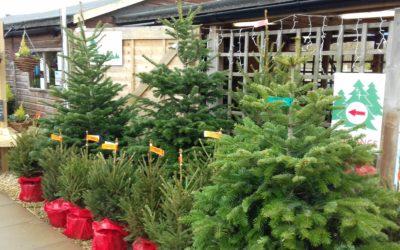 Top 10 Christmas Trees