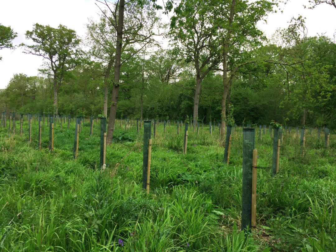 Woodland Creation and Sequestering Carbon