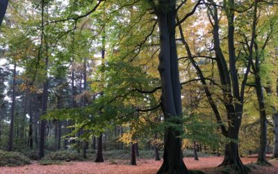 The real value of our trees and woodlands
