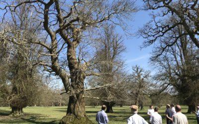 Veteran Tree workshop follows the Queen's arboriculture example