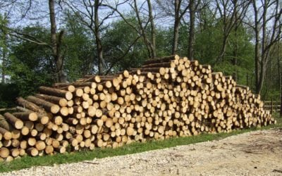 Timber – Take Action and Take Advantage of Excellent Prices!