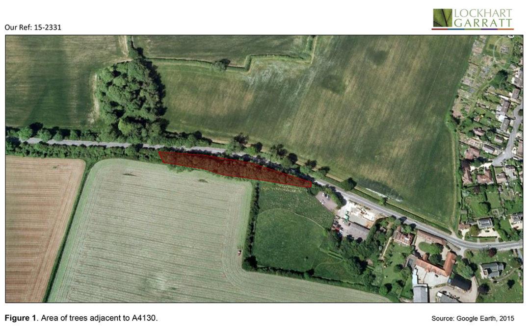 Nettlebed Estate – managing tree risk