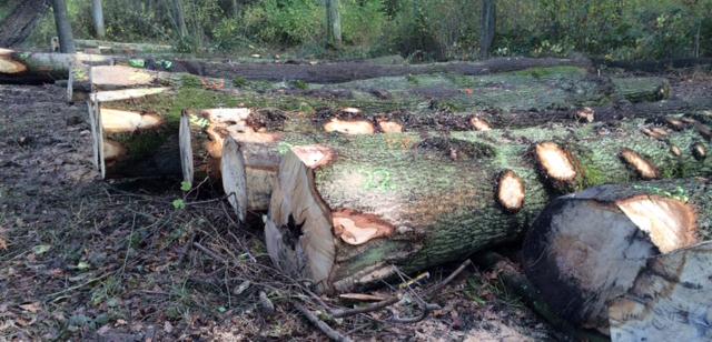 C Gilchrist, Skeffington Wood – a 20-year management plan