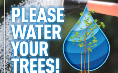 Hot weather and your trees